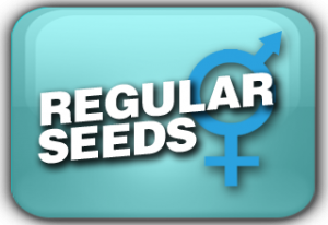 Regular Cannabis Seeds Usa