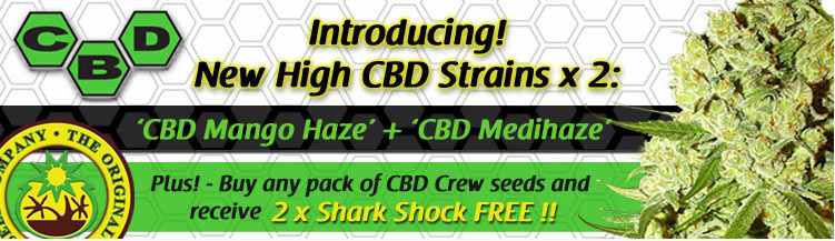 Buy CBD Crew Seeds Best Medical Marijuana Seeds