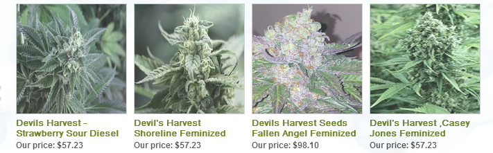 Devils Harvest Seeds Best Selling Feminized Cannabis Seeds