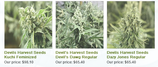 Devils Harvest Seeds Collection