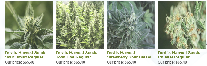 Devils Harvest Seeds Regular Cannabis Seeds