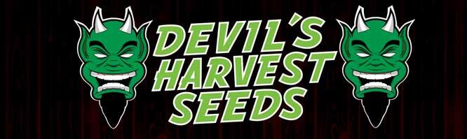 Buy Devil's Harvest Seeds Strawberry Sour Diesel Seeds Here