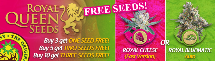 Free Cannabis Seeds – Royal Queen Seeds