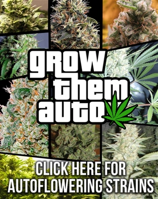 Buy Autoflowering Seeds Usa Worldwide Shipping - Free Seeds With Every Order!