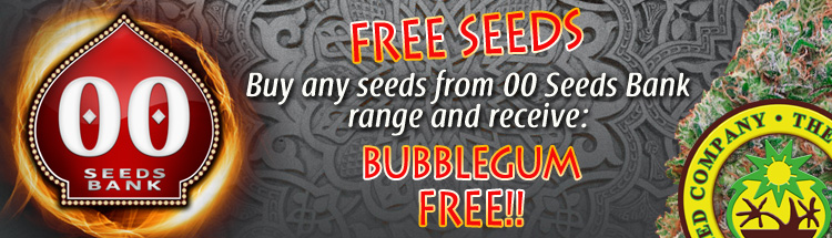 Free Cannabis Seeds – 00 Seed Bank