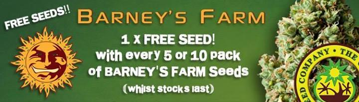 barney farm seed