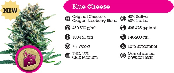 Royal Queen Seeds Blue Cheese Free Cannabis Seeds With Every Order