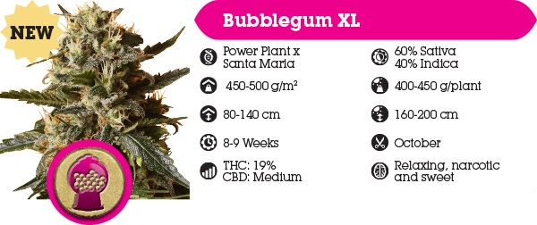 Royal Queen Seeds Bubblegum Best Online Prices USA Shipping