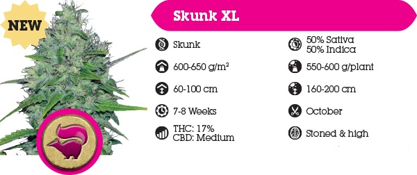 Royal Queen Seeds Skunk XL New For 2014