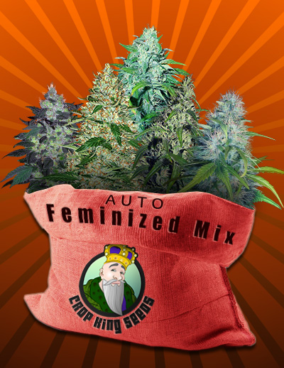 Autoflowering Seeds Mix Usa Shipping