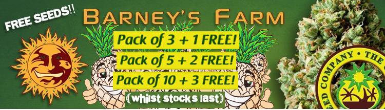 Free Cannabis Seeds – Barney's Farm Seeds