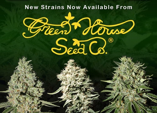 New Green House Cannabis Seeds For Sale - USA Worldwide Shipping