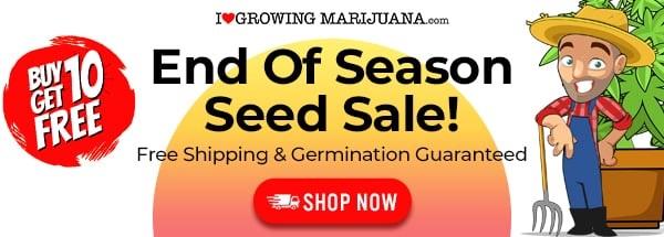 2021 End of Season Cannabis Seed Deals