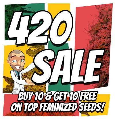 420 Feminized Marijuana Seeds Sale