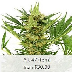 Buy AK 47 Cannabis Seeds