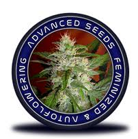 Advanced Seeds are available in packs of 1, 3 & 10. All Advanced Seeds come with our Price Guarantee