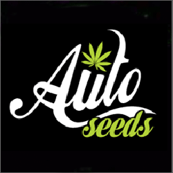 Auto Seeds are available in packs of 3 & 5 Feminized Cannabis Seeds.