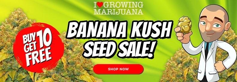 Banana Kush Cannabis Seed Deals