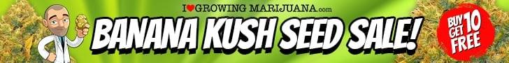 Banana Kush Marijuana Seeds Sale