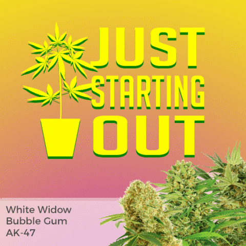 Beginner Mixpack Cannabis Seeds