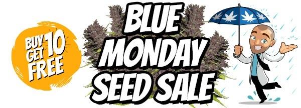 Blue Monday Sativa Marijuana Seeds Sale