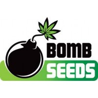 Bomb Seeds - Free Marijuana Seeds With Every Order!