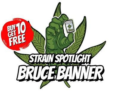 Bruce Banner Cannabis Seeds Sale