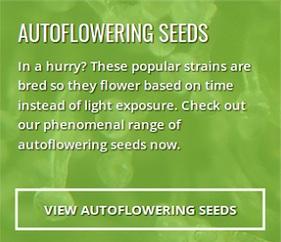 Buy Autoflower Seeds