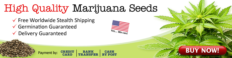Buy Blueberry Cannabis Seeds In The USA.