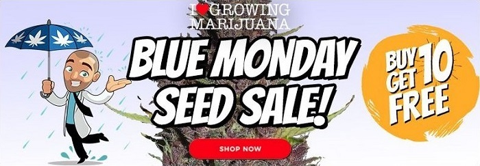 Buy Cannabis Seeds In The Blue Monday Sale