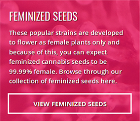 Buy Feminized Seeds