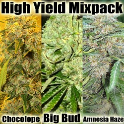 Buy High Yield Cannabis Seeds $89.00