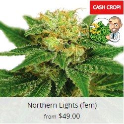 Northern Lights Cannabis Seeds USA