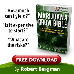 Using Seed Bank Evaluation To Find Great Seed Bank Buy-US-Cannabis-Seeds-free-grow-bible