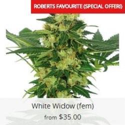 Buy White Widow Cannabis Seeds
