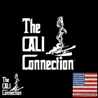 Cali Connection Cannabis Seeds