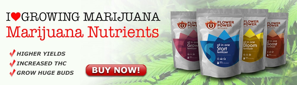 Cannabis Seeds Nutrients On Sale Now