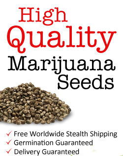 Cannabis Seeds | Biggest Assortment | Best Prices - Zamnesia