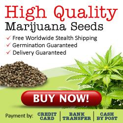 USA Cannabis Seeds For Sale