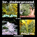 Dr Underground Seeds-  High Quality Feminized Marijuana Seeds - Worldwide Shipping