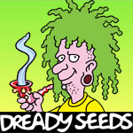 Dreadybob the seed breeder behind these five cannabis strains has been studying marijuana genetics for some 12 years. He decided he would maintain his own Cannabis Seedbank to preserve his cannabis genetics in case of catastrophe. Dready Seeds came into existence when Dreadybob went from preserving, to breeding, different marijuana seeds.