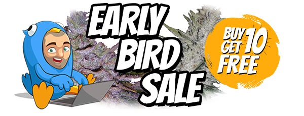 Early Bird Cannabis Seed Sale