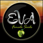 Eva Seeds - Free Marijuana Seeds With Every Order!