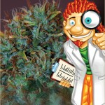 The Expert Seeds Catalogue consists of an Indica line, a Sativa line and an Autoflowering line.