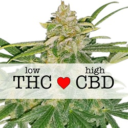 Feminized Critical Mass CBD Seeds