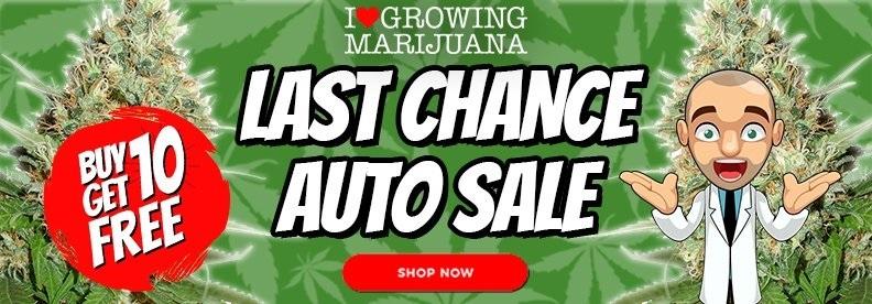 Free Autoflowering In The End Of Season Sale