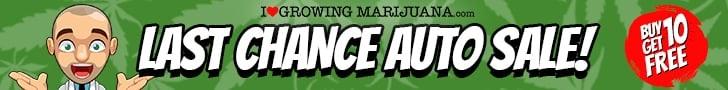 Free Autoflowering Seeds Online Sale