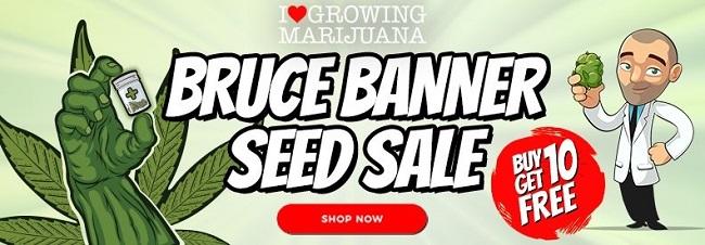 Free Bruce Banner Cannabis Seeds Offer