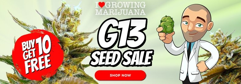 Free Cannabis Seeds G13 Launch Offer