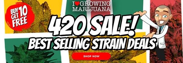 Free Feminized Cannabis Seeds 420 Deals